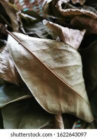 Dried soursop leaves full frame