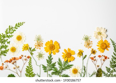 Dried Spring Flower Flats on light Background with Copy Space