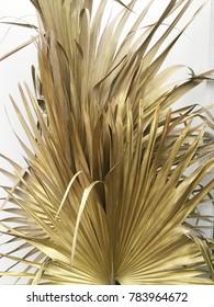 Dried sugar palm leaf on white background