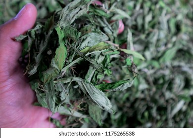 Dried tea green leaves  before Packing Package