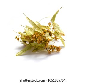 Dried Tilia isolated on white