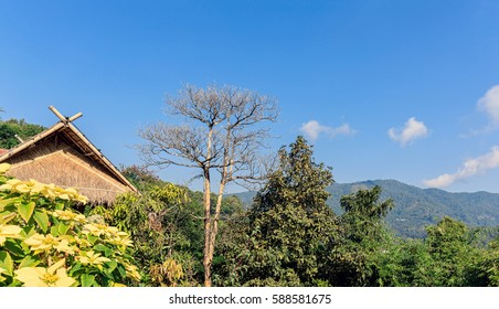Dried tree with traditional house against on landscape view
