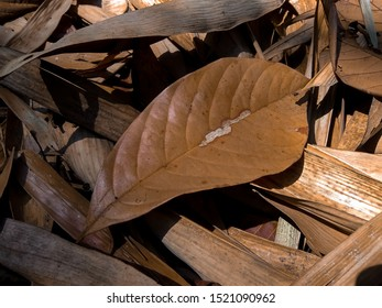 dried tropical leaves on a pile of bamboo leaves in the morning sun.  foliage.