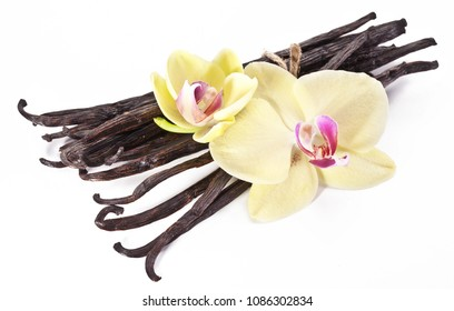 Dried vanilla fruits and orchid vanilla flowers isolated on white background.