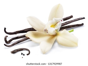 Dried vanilla sticks and orchid vanilla flower isolated on white background.