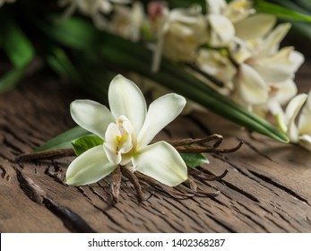 Dried vanilla sticks and vanilla orchid on wooden table. Close-up.