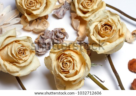 Dried White Roses Stock Photo Edit Now 1032712606 Shutterstock