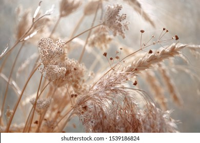 dried wild carrot flowers together with dried grass and spikelets beige on a blurred background - Shutterstock ID 1539186824