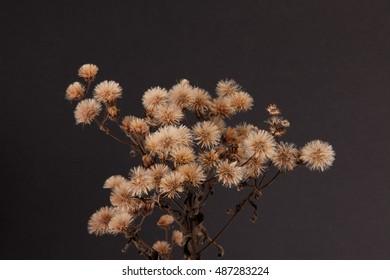 A dried wildflower.