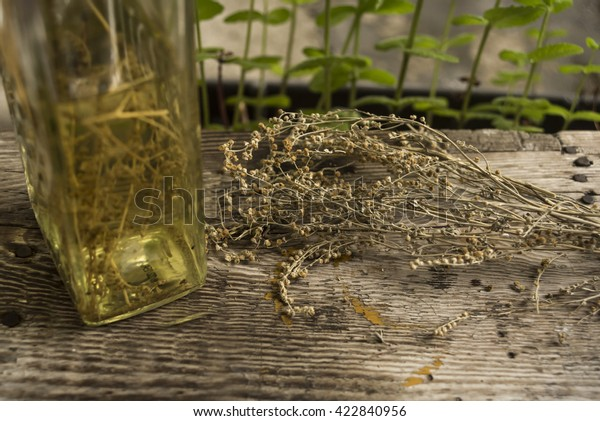 Dried wormwood and wormwood drink in a bottle