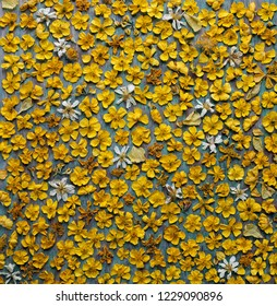 Dried yellow flowers background