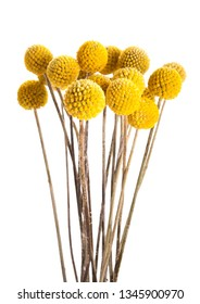Dried yellow flowers isolated on white background