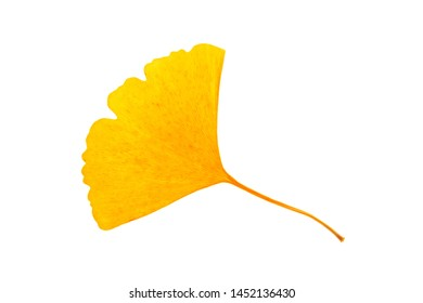 Dried yellow Ginkgo leaf on white background.