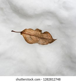 dried yellow  leaf lies in the snow , from above
