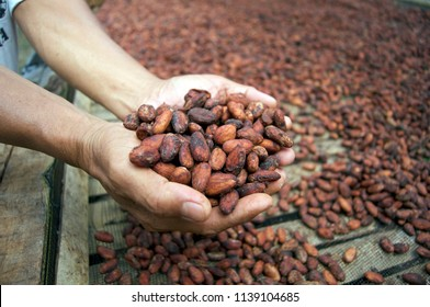 dried,fermented,fine flavour cacao beans
