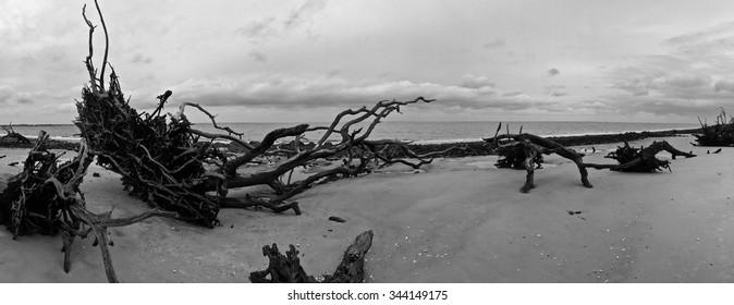 Drift Wood Beach/Grave Yard of Trees