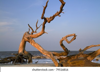 Drift wood at the ocean beach under sunset light (Jekyll Island, Georgia, USA).