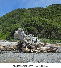 Drift Wood Sculpture on stony Kapiti Island Beach, Waikane,  New Zealand.