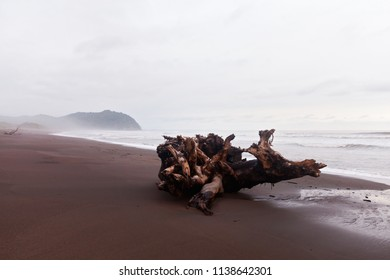 Drift Wood at a wild beach in Costa Rica
