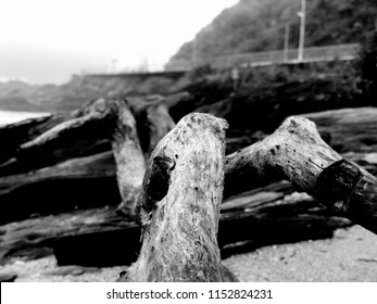 Driftwood at Cabeçudas Beach, Itajai City, Brazil.