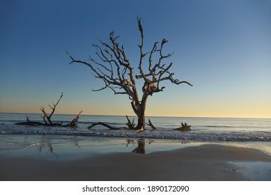 Driftwood Beach Reflections in Georgia