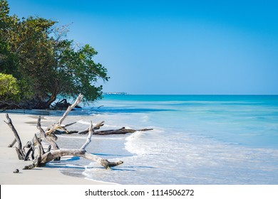 Driftwood and bent trees by the seashore on this beautiful white sand Caribbean electric blue beach in Negril, Jamaica. No people, quiet peaceful sunny day, endless views of the turquoise ocean.
