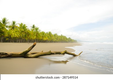Driftwood and coconut palms on the deserted Playa Linda on the Pacific Coast of Costa Rica