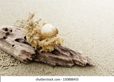 Driftwood and coral on beach