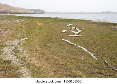 Driftwood Creates an Abstract Line on the Shore in Pt. Reyes National Seashore