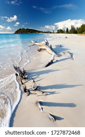 Driftwood at Ffryes Beach in Antigua.
