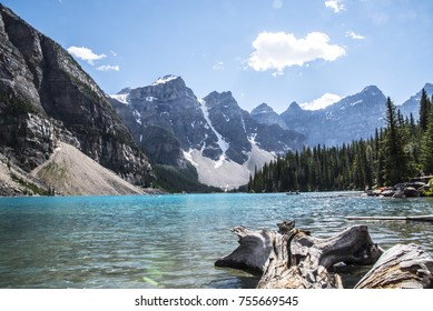 Driftwood Floating In Lake Louise Canada