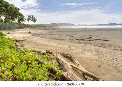 Driftwood and flowery vegetation on a misty morning at Playa Guiones in Nosara, Costa Rica