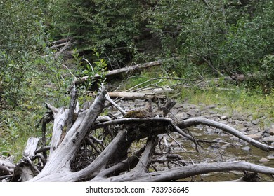 driftwood in the forest