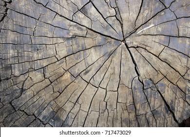 Driftwood grunge pattern by the sabdy beach
