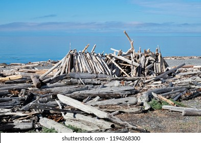 Driftwood has been collected and added to a home made shelter on South Beach On San Juan Island near American Camp.