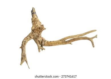 driftwood isolated on white background