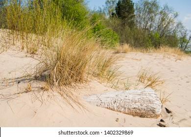 Driftwood log on sea coast. Sunny summer day. Latvia. River called Gauja