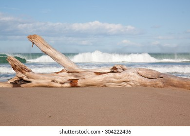 driftwood log on white sandy shore, clear sunny day at a surf beach, Gisborne, East Coast, North Island, New Zealand