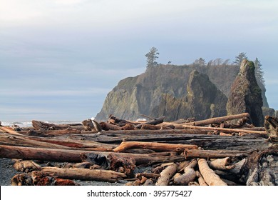 Driftwood Logs Covering a Beach with Sea Stacks