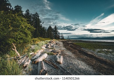 Driftwood and logs on a sandy beach on Vancouver Island with forest and blue sky in the backgorund.