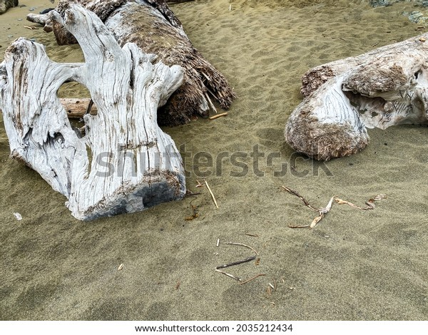 driftwood logs washed up on shore ocean sea beach sand scene