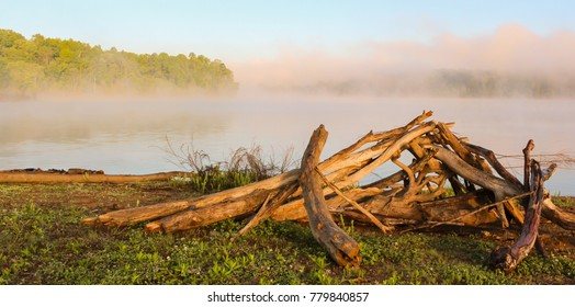 Driftwood Near Foggy Lake