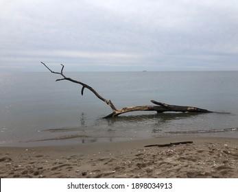Driftwood in Ocean Water in Winter