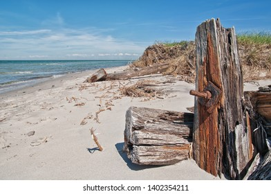 Driftwood on the Baltic Sea coast