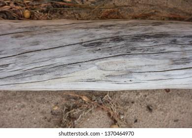 Driftwood on a beach.  Lexington Park, MD, USA.