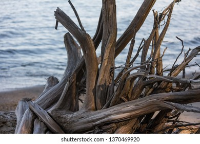 Driftwood on a beach with open water in the background.  Lexington Park, MD, USA.