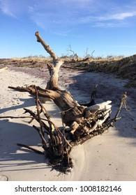 Driftwood on beach on sunny day
