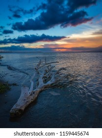 Driftwood on a Beach at Sunset