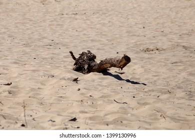 Driftwood on deserted sandy beach.
