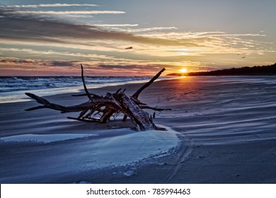 Driftwood on the Hilton Head Isand beach.